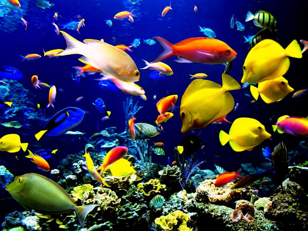 красного моря фото