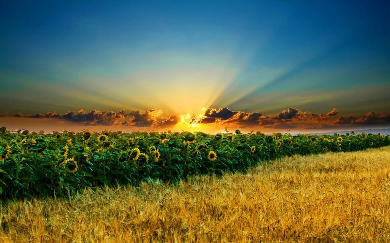 Image result for природа украины