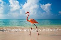 Популярные курорты Доминиканы