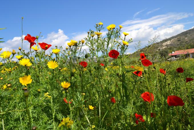 Погода на Кипре в феврале