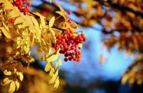 Где лучше отдыхать осенью