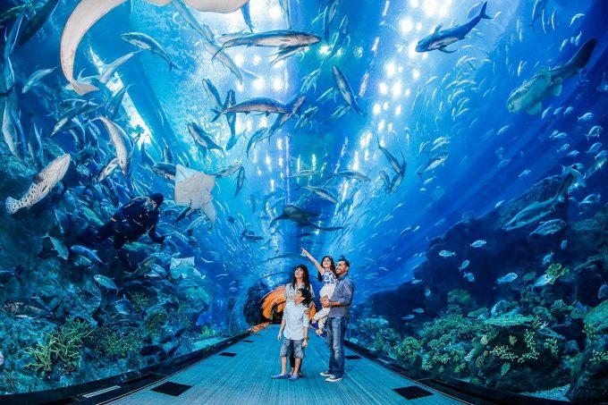 Dubai Mall аквариум