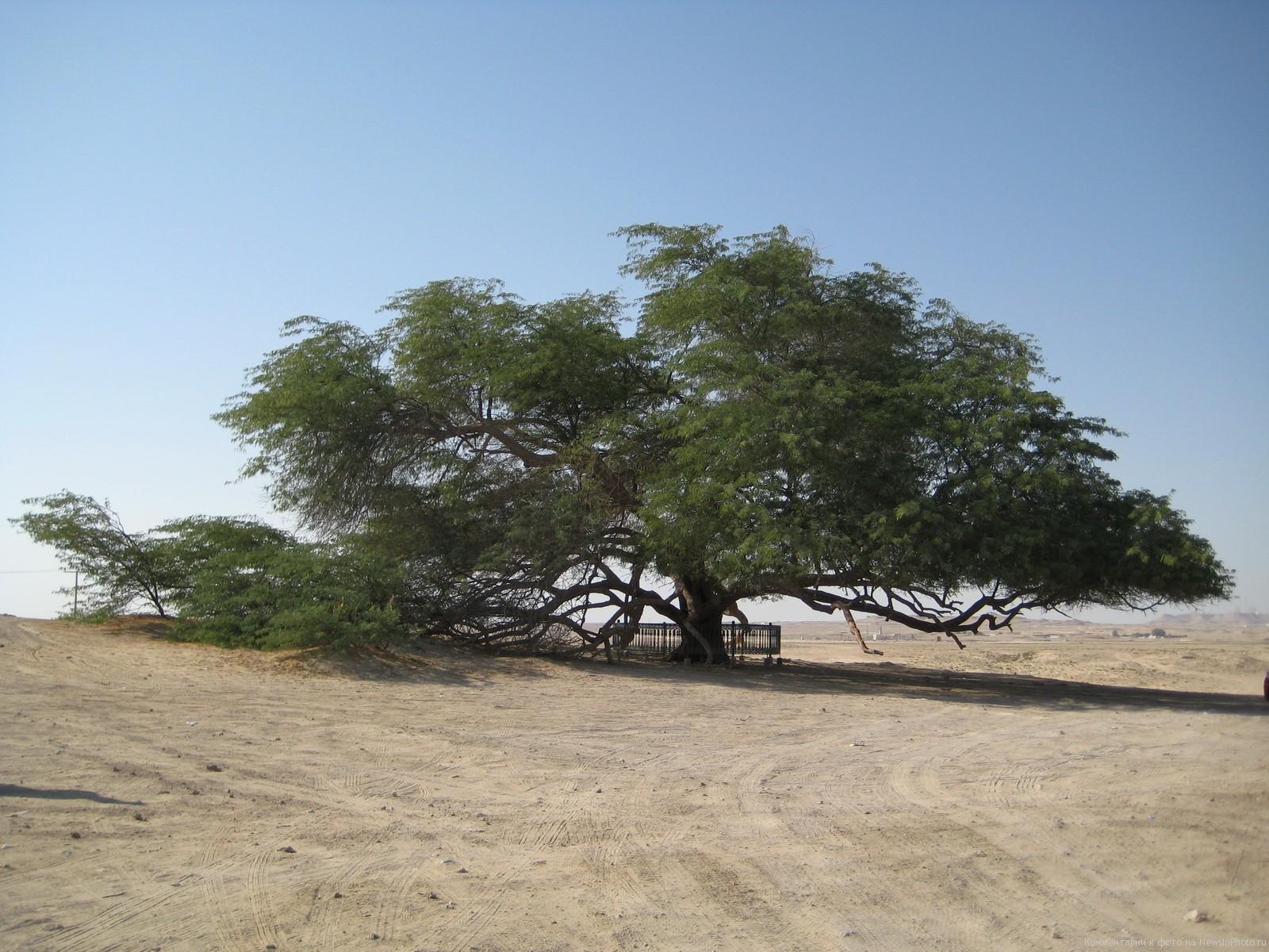 Природа Бахрейна
