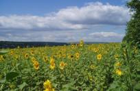 Климат Молдавии