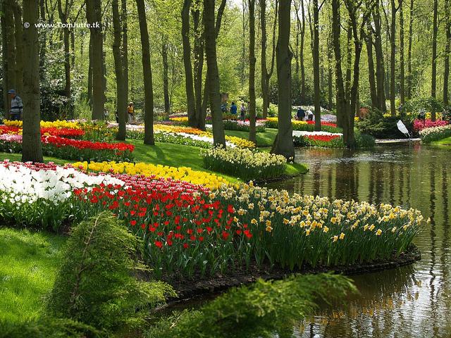 Парк тюльпанов Кикенхоф