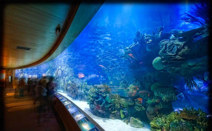 Океанографический парк в Валенсии внутри